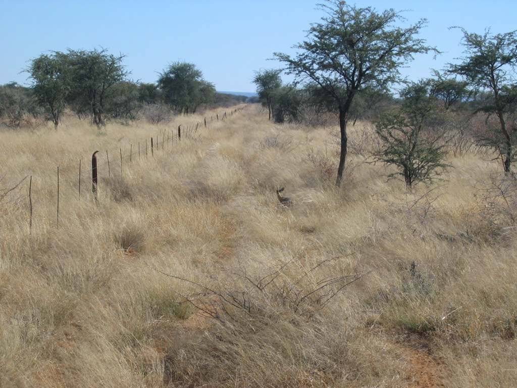 I saw some new and interesting things in Namibia, like the tiny steenbok.