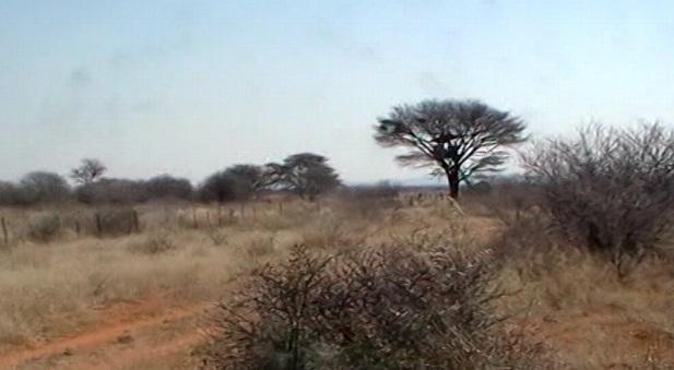 warthog blind