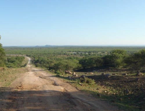 Country Report: Hunting In Zimbabwe