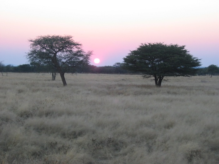 additional safari items