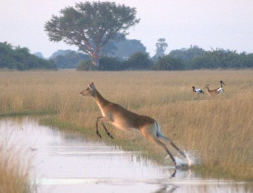 Country Report: Hunting In Botswana