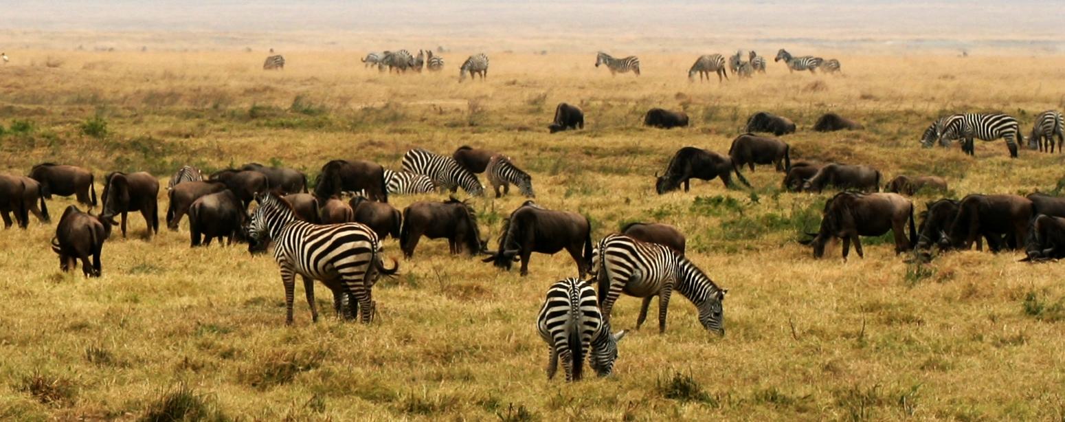 hunting in tanzania featured