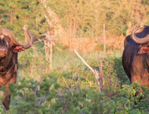 Country Report: Hunting In Mozambique