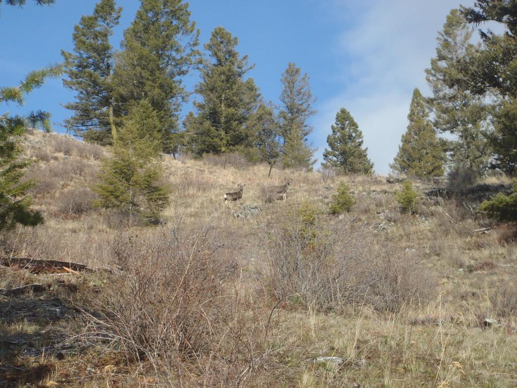 mule deer grouse hunt
