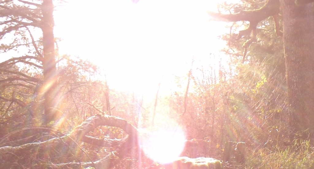 This trail camera was facing east, and looked directly into the rising sun.