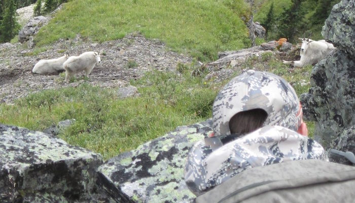 Discounted Mountain Goat Hunt