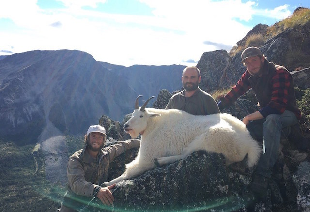 discounted mountain goat hunt 3