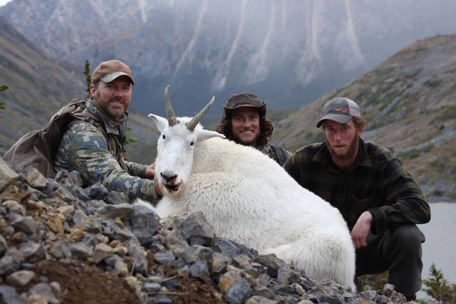 discounted mountain goat hunt 4