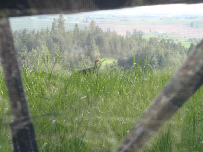 turkey hunting lessons learned