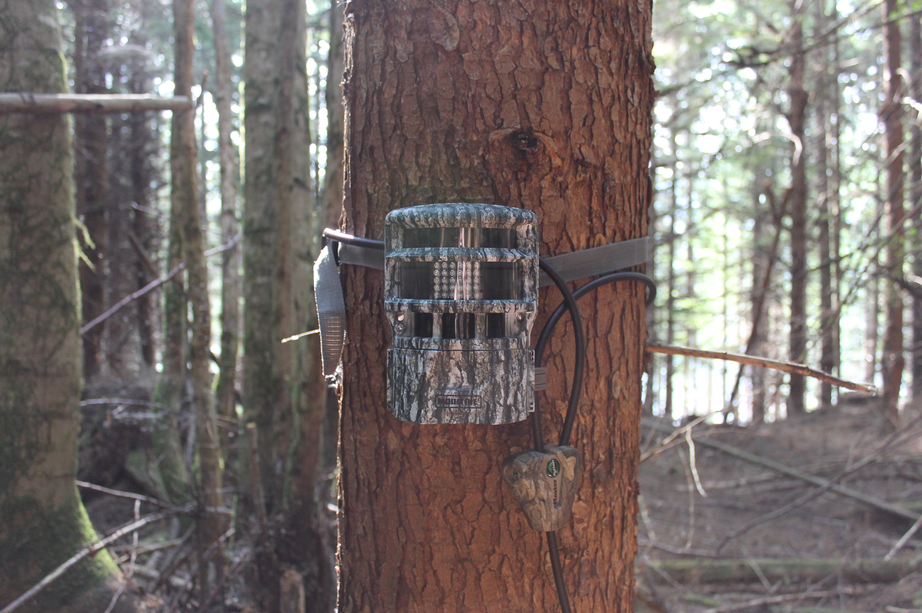Moultrie Panoramic 150 Game Camera Review | Big Game Hunting