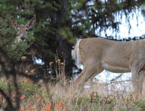 Muzzleloader Deer Hunting In Eastern Washington