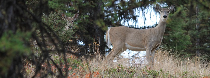 muzzleloader deer hunting in Eastern Washington WT deer republic featured