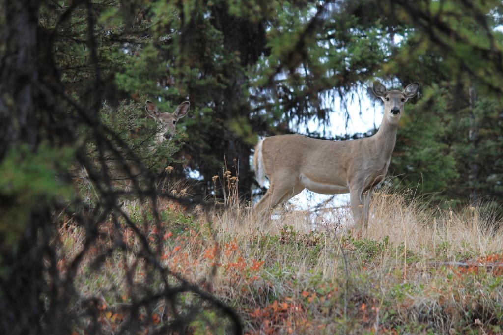 muzzleloader deer hunting in Eastern Washington WT deer republic