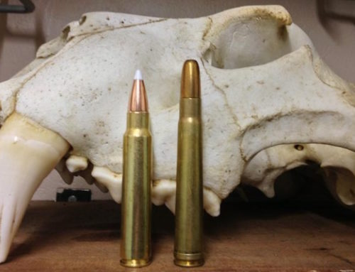 The .375 Ruger: An Up And Coming Dangerous Game Cartridge?