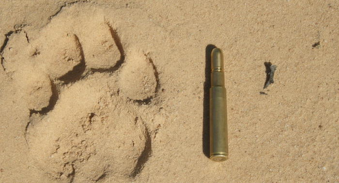 416 Rigby classic big game hunting cartridge
