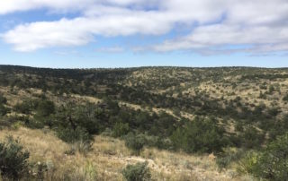 Here's How My 2017 Self-Guided New Mexico mule deer hunt On Public Land Went