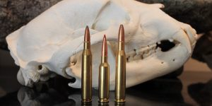 25-06 vs 6.5 Creedmoor vs 270: The Results Might Surprise You