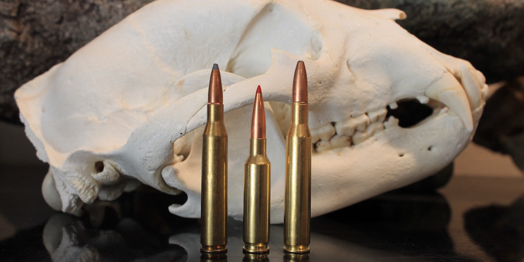 25-06 vs 6.5 creedmoor vs 270 winchester feat