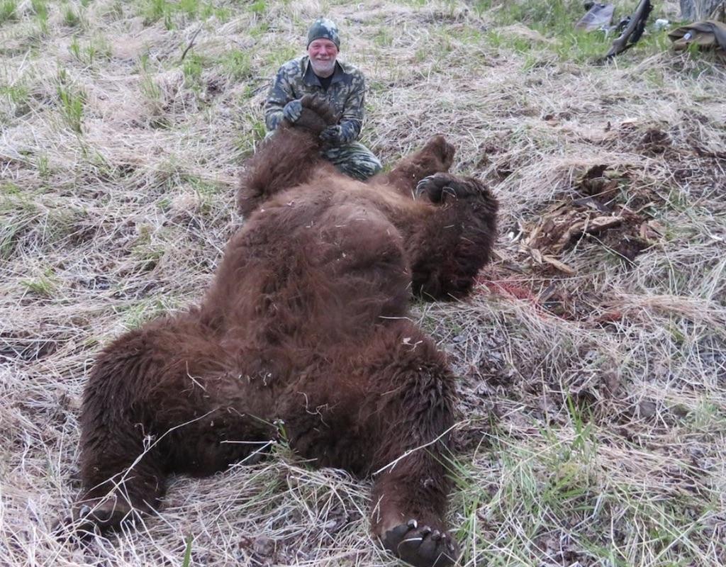 dan roland brown bear