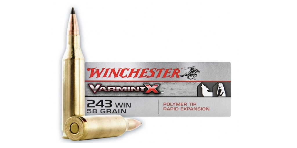 picture of best 243 ammo for deer hogs and varmints varmint x